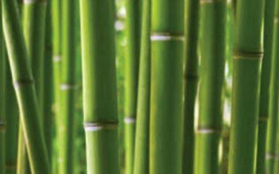 Le bambou, un Anti Ride Naturel